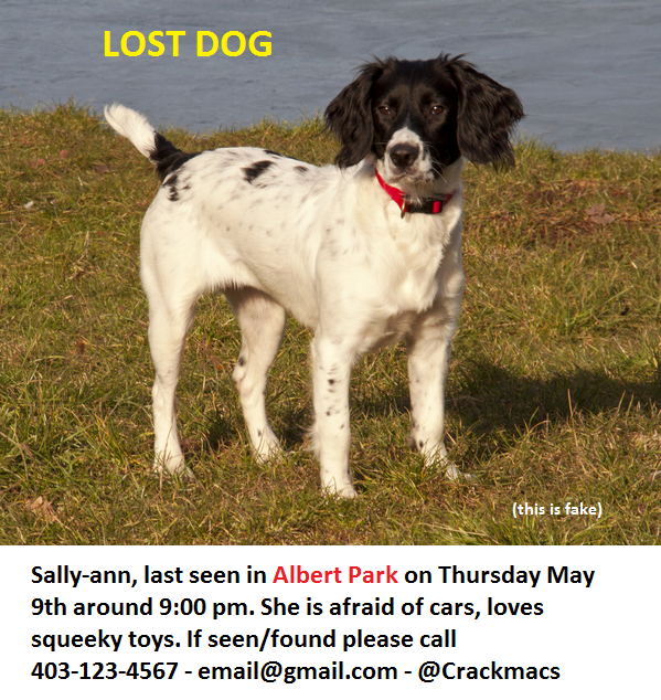 Lost Pets in Calgary