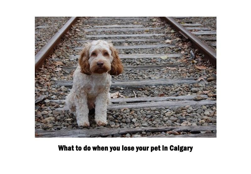 Lots pets in Calgary