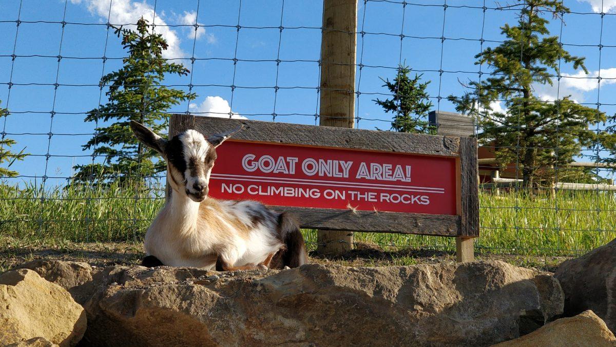 Granary Road Goats