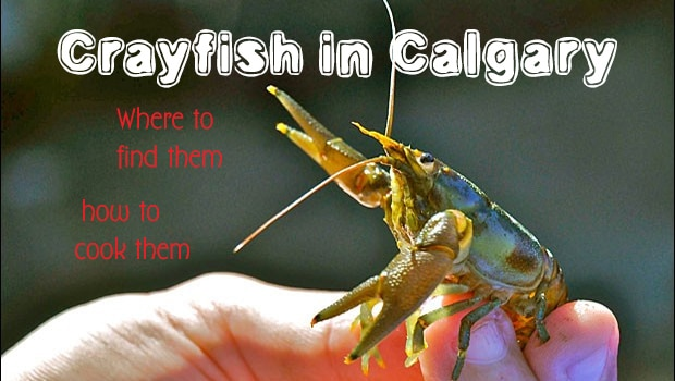 Where to find and catch Crayfish in Calgary