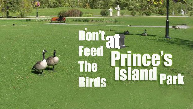 Plan on feeding the birds at Prince's Island Park? Don't feed them bread!
