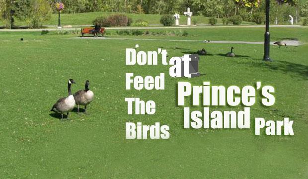 Birds Prince's Island Park