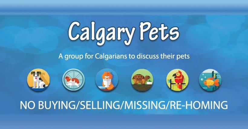 Calgary Groups Calgary Pets
