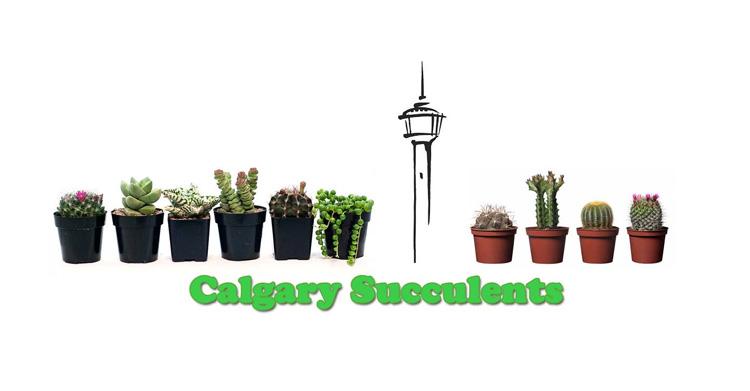Calgary Groups Calgary Succulents