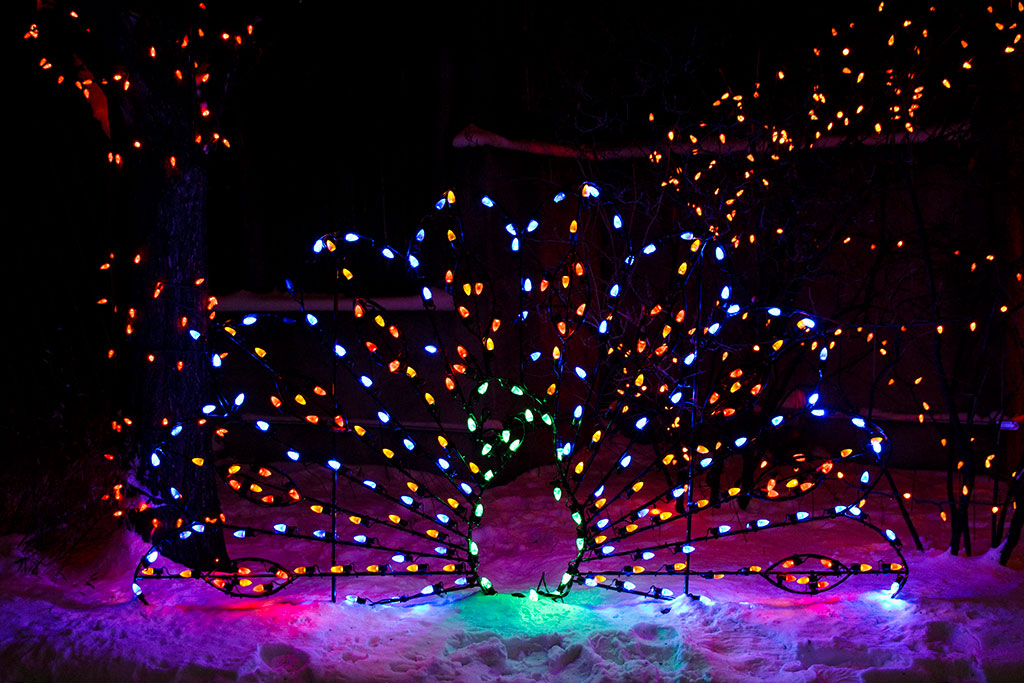 Calgary Zoo ZOOLIGHTS peacock