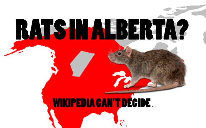 Rats in Alberta