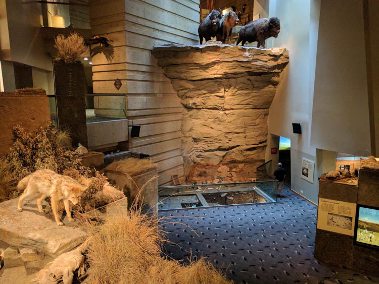 Head-Smashed-In Buffalo Jump Inside Wolf Bison