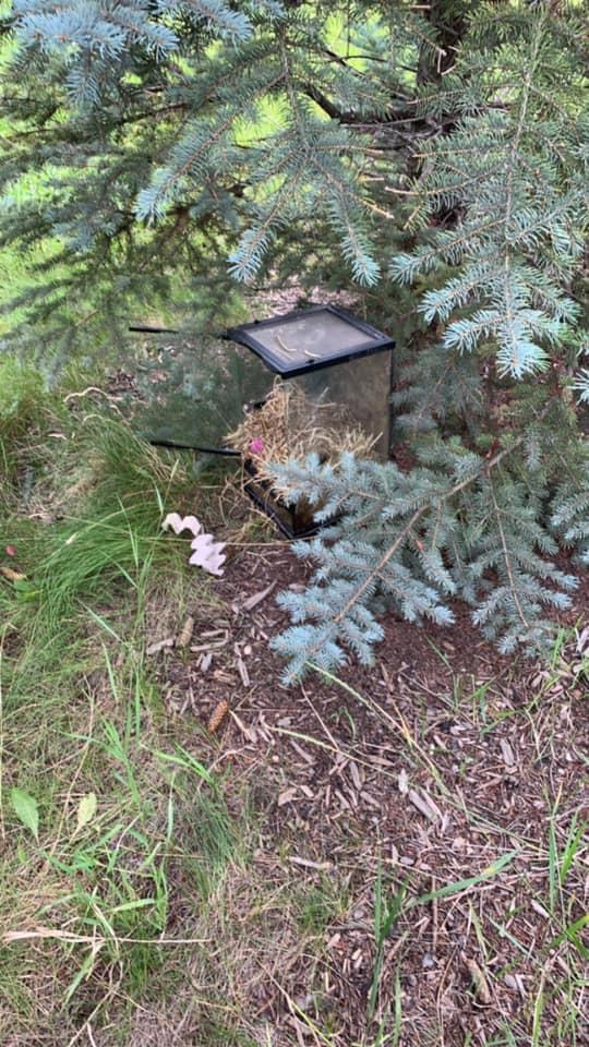 Tuffnail the Airdrie Tarantula abandoned terrarium