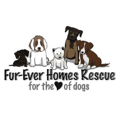 Fur-ever homes rescue amazon wishlist
