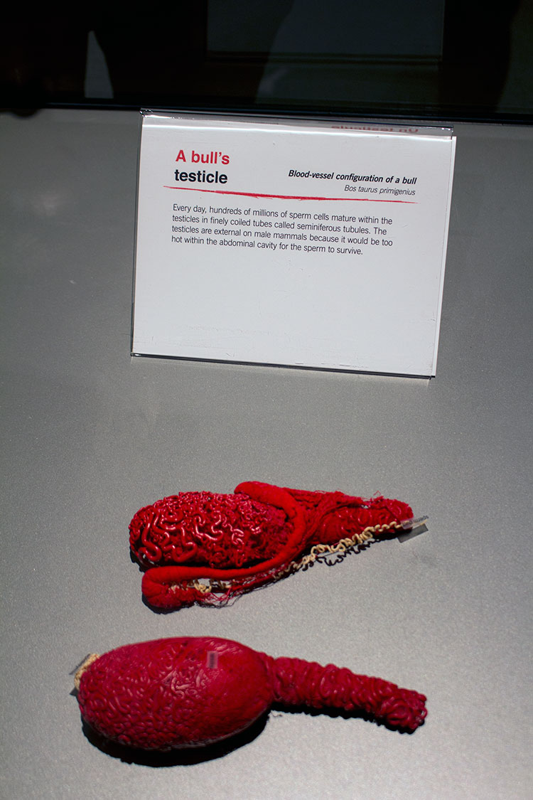 TELUS Spark BODY WORLDS Animal Inside Out Bull's testicle