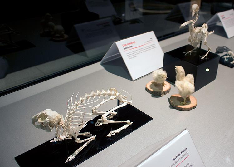 TELUS Spark BODY WORLDS Animal Inside Out cat skeleton