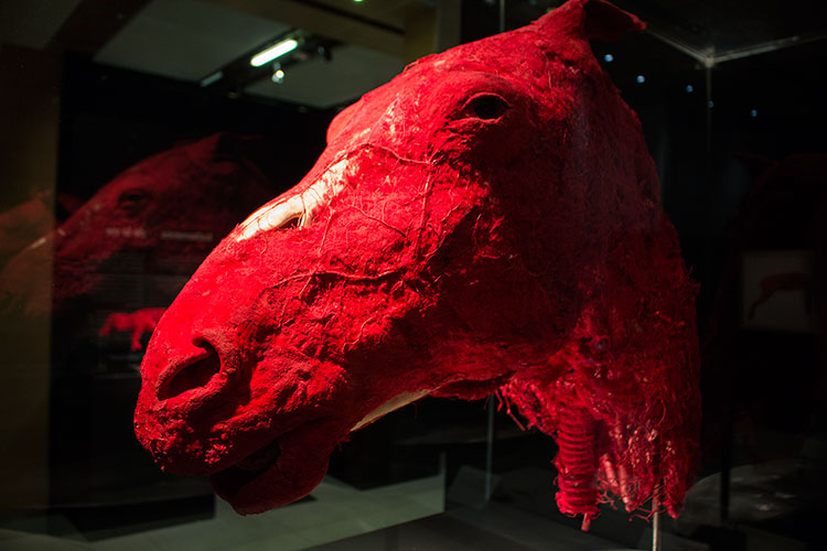 TELUS Spark BODY WORLDS Animal Inside Out horse head red