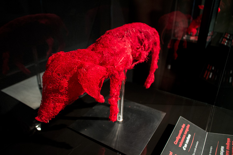 TELUS Spark BODY WORLDS Animal Inside Out pig