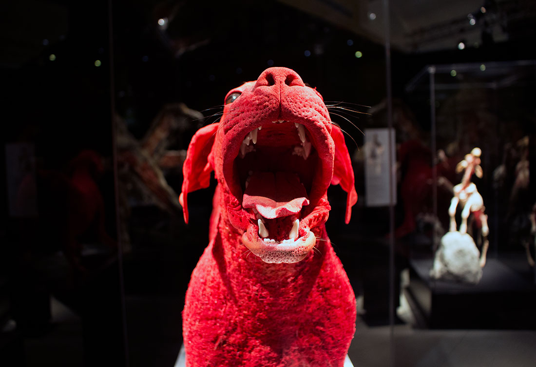 TELUS Spark BODY WORLDS Animal Inside Out
