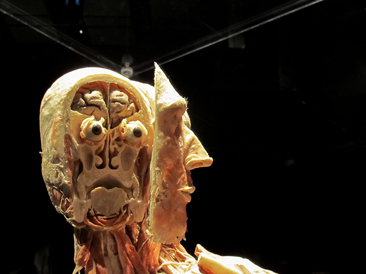 TELUS Spark BODY WORLDS Animal Inside Out Human face
