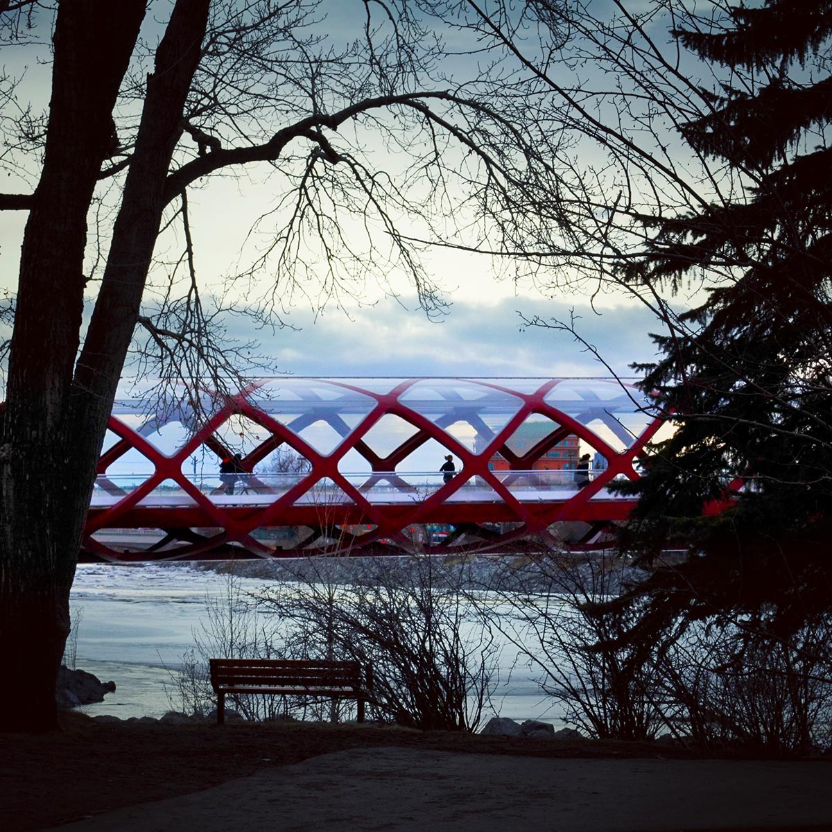 The Peace Bridge in Calgary looking from Prince's Island Park